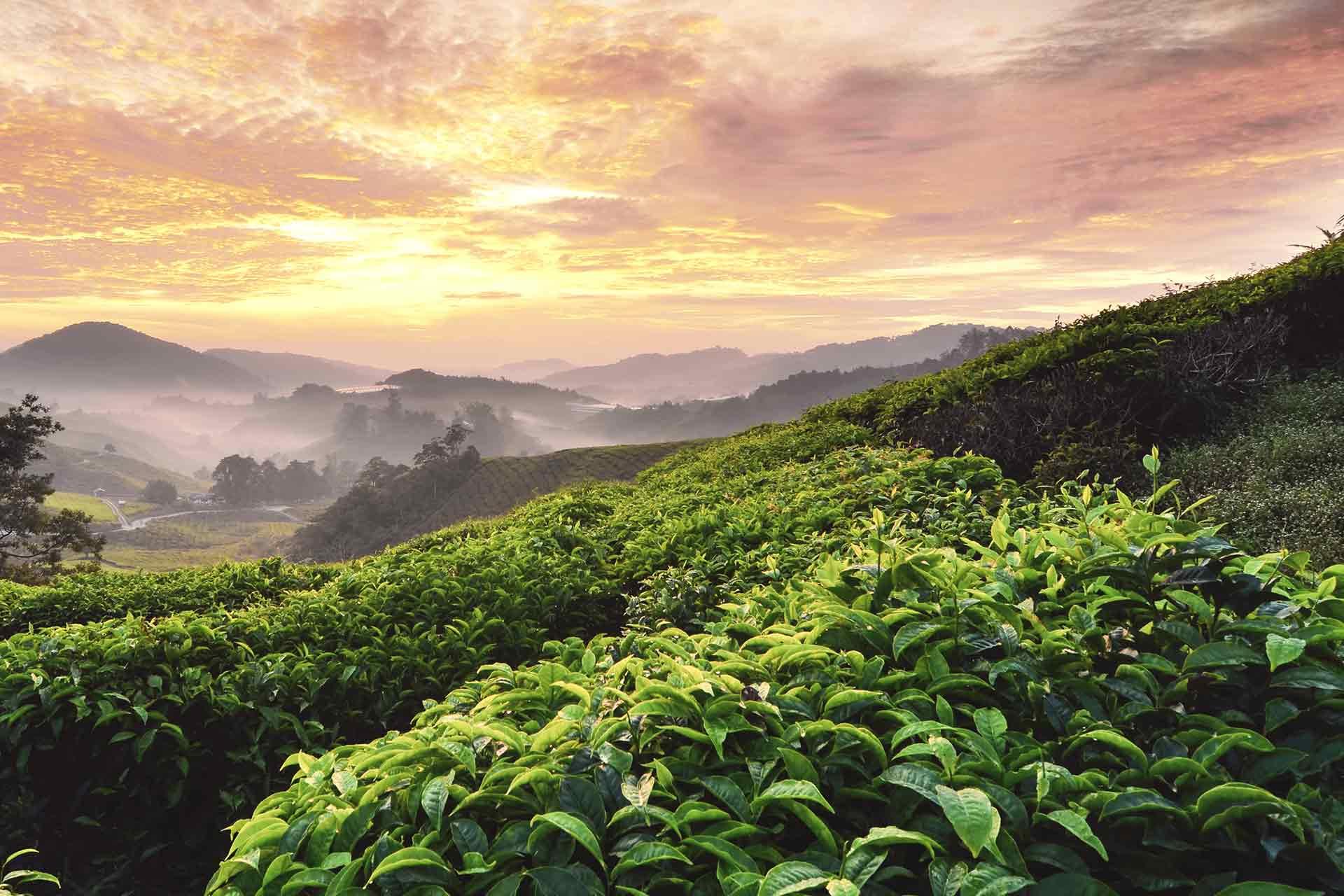 Unitee Teegarten